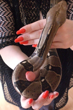 Mrs Janice mit Boa Constrictor